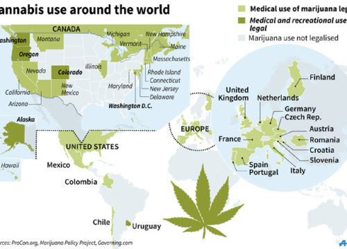 cannabis business plan sample
